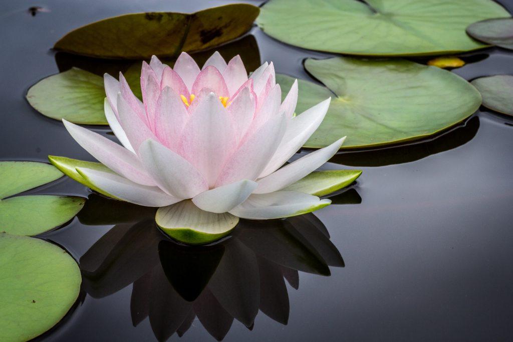 Beneficios de practicar mindfulness en familia